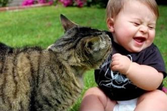 Funny Babies Laughing Hysterically at Cats Compilation ★ Best Funny Babies Videos 2017
